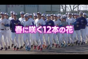 【2020年センバツ出場校紹介】花咲徳栄(埼玉) 「春に咲く12本の花」編