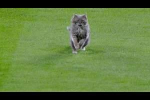 【SPOZONE MLB】<br /> 日本時間3日に行われたドジャースとロッキーズの試合の8回裏、突然猫がフィールドに現れ縦横無尽に走り回る事態に…<br /> 無事スタッフに抱えられ退場した…