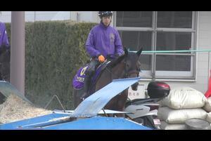 【大阪杯(日曜=4月5日、阪神芝内2000メートル)稲富菜穂のだいじょばないWeb編】GⅠに昇格して今年で4年目となる大阪杯が今週末の阪神競馬場で行われる。春の中距離王者を決める一戦で、今年もGⅠ馬5頭を筆頭に興味深いメンバーが集結した。<br /> <br />  一昨年の神戸新聞杯以来、なかなか勝ち切れていないワグネリアンだが、ダービー馬の威信にかけてこのままくすぶってはいられない。ブランク明けで臨んだ昨年の大阪杯で3着に好走しており、この舞台への適性の高さは明らか。今回も休養明けになるが、ビシビシ調教を積んで当時より状態は良さそうだ。<br /> <br />  稲富菜穂の直撃に藤本純助手の口から思わずV宣言が!?<br /> <br /> (3月25日撮影)