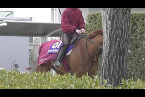 【大阪杯(日曜=4月5日、阪神芝内2000メートル)】3歳後半からは着を落とすことも少なくなかったラッキーライラックだが、「すべてにしっかりした敗因があってのもので、馬は毎回頑張って走っていた」と松永幹夫調教師は力説する。現役ラストイヤーとなる今年、さらなるGⅠタイトルの上積みを期待したい(3月24日撮影)。