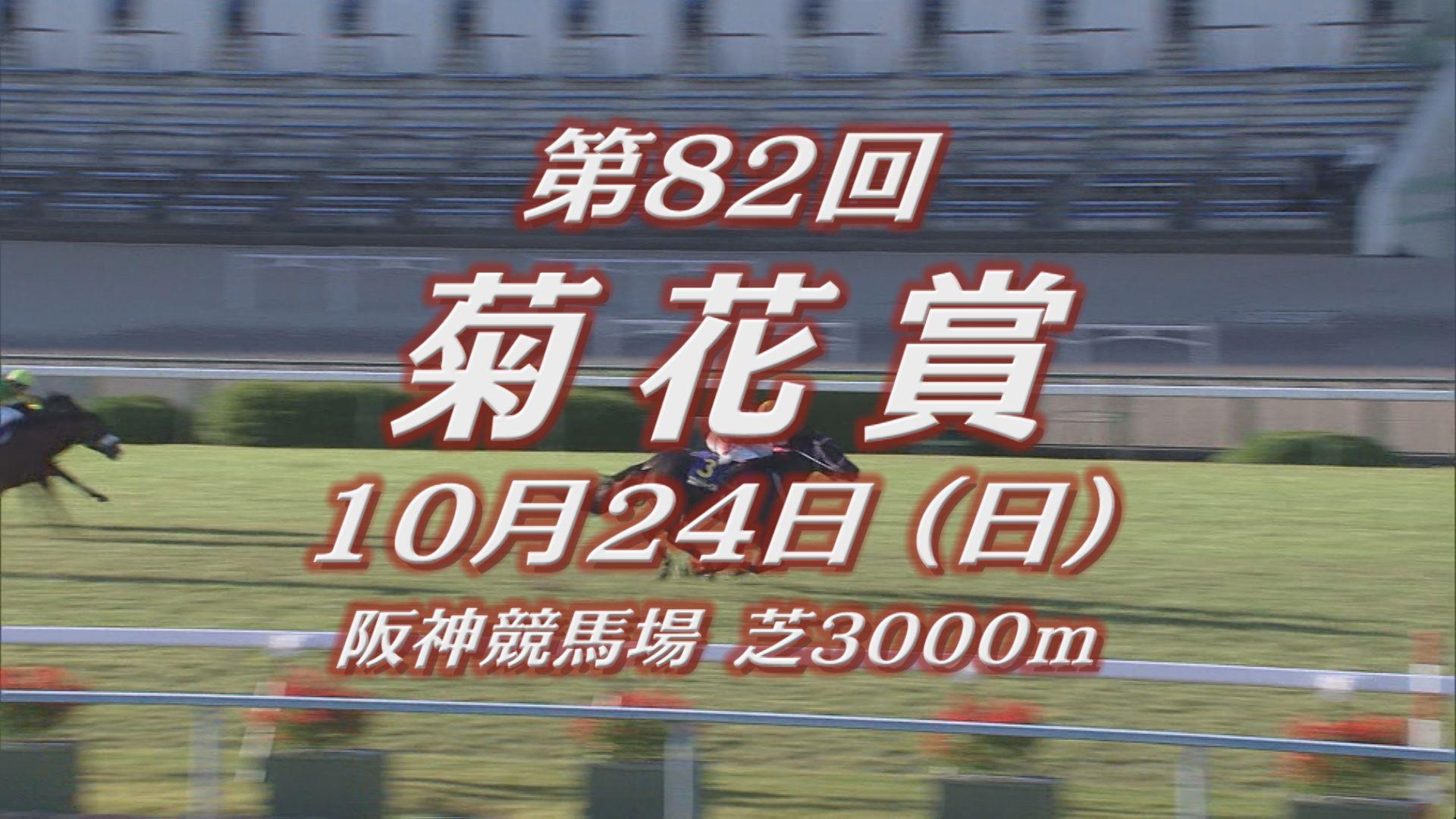 【GIレース出走予定馬紹介】菊花賞 10/24 阪神競馬場