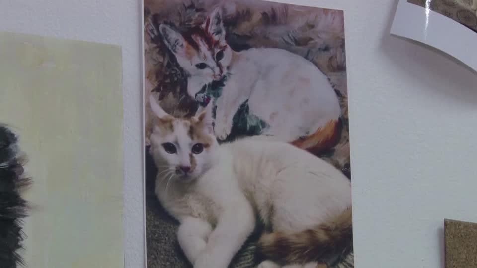 動物保護施設のためにネコの絵を描くロシアの10歳少年 - ロイター映像ニュース | Yahoo! JAPAN